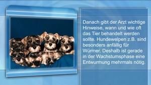 Entwurmung: Hund / Katze